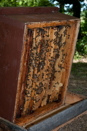beehives with honeycomb