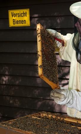 A beekeeper checkes his hives
