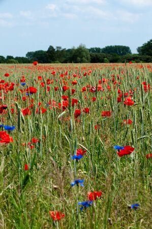 tritium: Poppy and rye