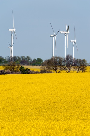 eco sensitive: Wind turbines in a rapeseed field