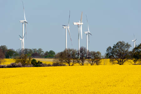 Wind turbines in a rapeseed field Stock Photo - 13530926