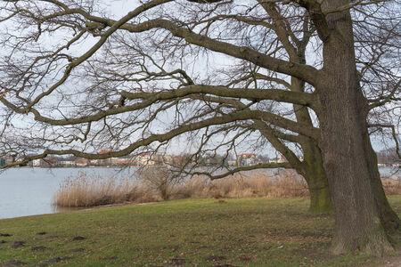 Oak trees near Potsdam Germany photo