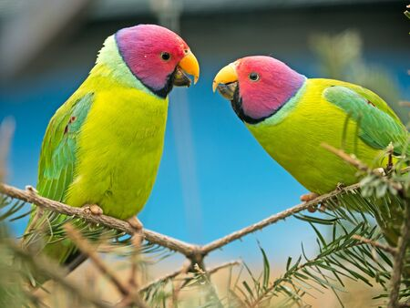 canaries: two canaries sitting on a branch teasing eachother