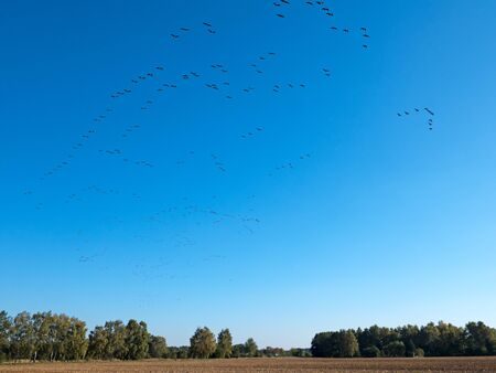 central europe: Migration of wild ducks in central Europe