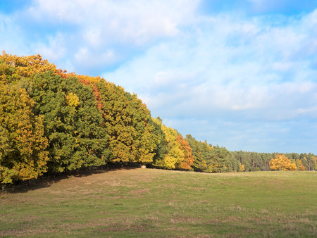 autumn motif: Forest with foliage in autumn at a sunny day