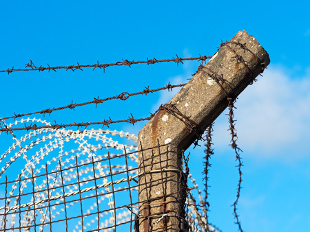 razor wire: old barbed wire fence in bright sunlight