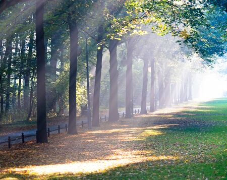 Sunrays in the park