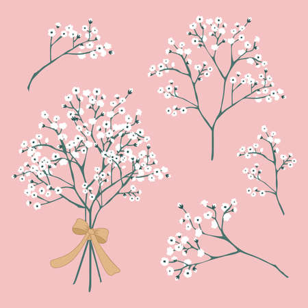 Vector Baby's Breath Flowers tied with ribbon