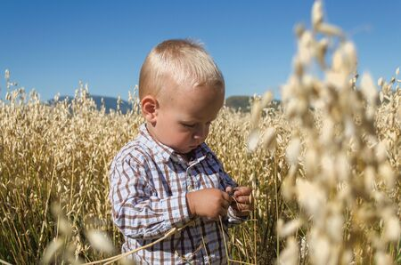agronomist: the little boy in the wheat oats field plays young agronomist