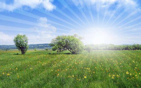 beutiful nature photo
