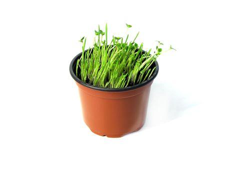 grass in orange pot photo