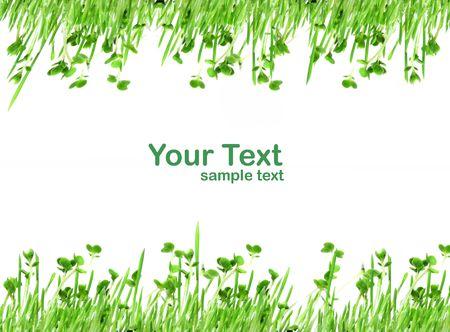 Framework from a grass Stock Photo - 4939566