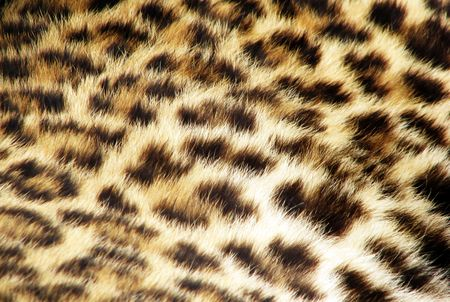 leopard fur photo