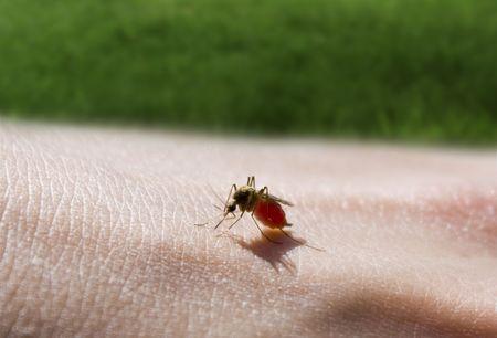 mosquito sucking a hand Stock Photo - 5763155