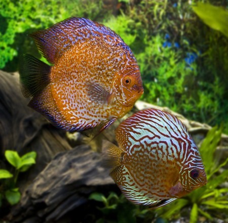 Two big discus Stock Photo - 7717483