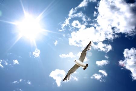 pajaros volando: Gaviota en el cielo  Foto de archivo