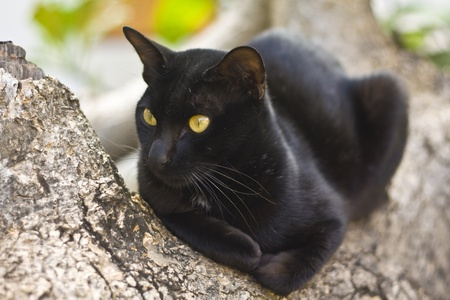 Black cat on the tree photo