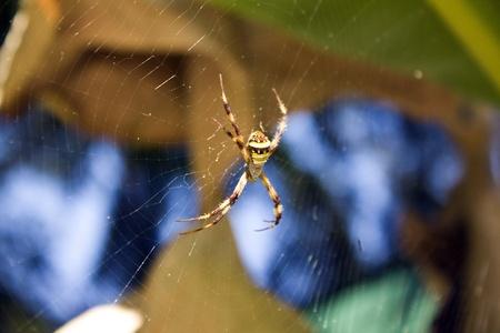 arachnophobia: Colored spider