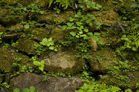 weed block: Walls stone