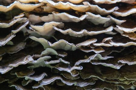 mycelium: wood mushrooms