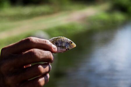 little fish in hand photo