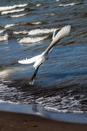 photography of a white heron in beach photo