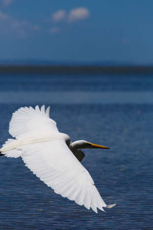 White heron in beach photo