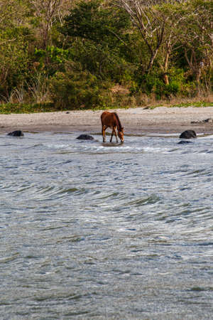 horse drinking water at beach photo