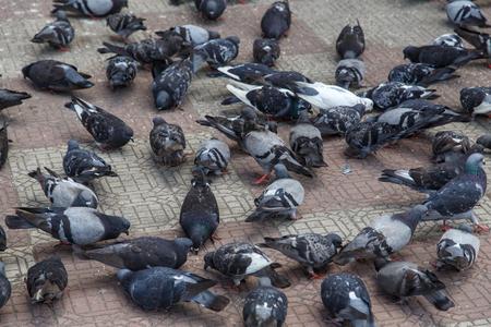 Doves group on street