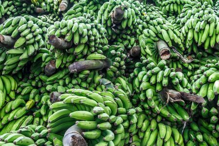 bunched: Heap of green banana