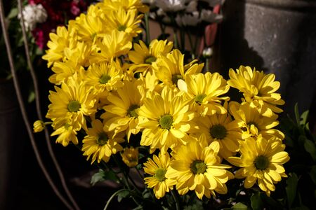 narcissist: Beautiful yellow cut flowers sold on outdoor flower shop Stock Photo