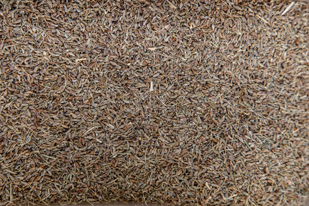 cumin: cumin seed spices