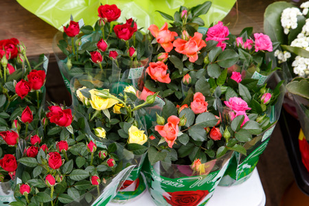 blanche: colorful beautiful flowers from the florists shop Stock Photo