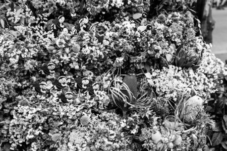 bw: dry flowers group vintage style B&W
