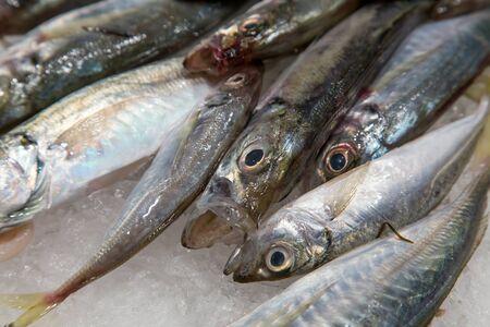 la boqueria: Fresh sea fish in ice on mercat de la boqueria Barcelona, Spain Stock Photo