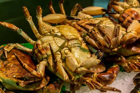 cangrejo: cangrejos capturados fresco, son fotografiados en el mercado de pescado