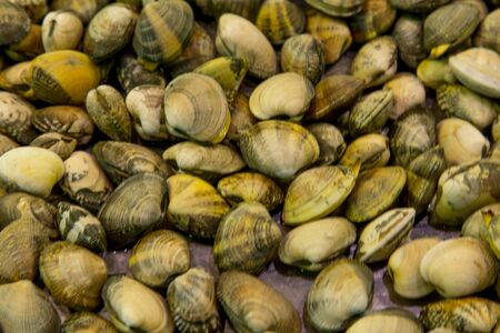 pike place: Fresh clams on ice in Pike place market Stock Photo