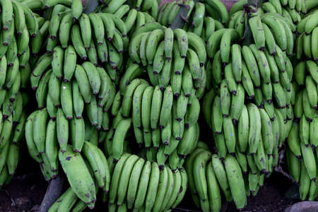 bunched: green banana group on market