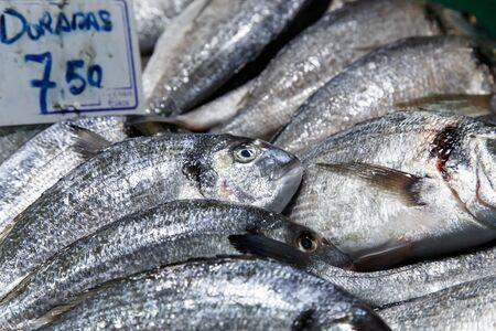 dorada: dorada fish at market for sale
