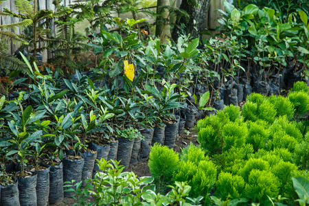 trees nursery Stock Photo