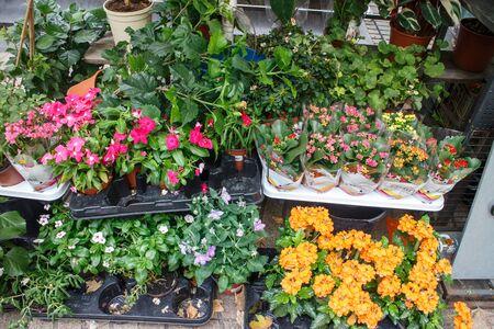 sidewalk sale: Flowers outside of flower shop in Las Ramblas, Barcelona