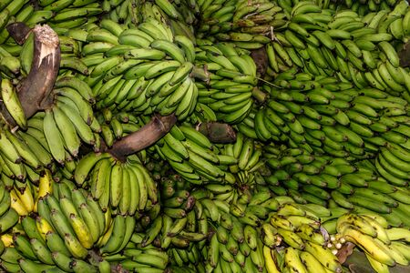 bunched: banana group Stock Photo