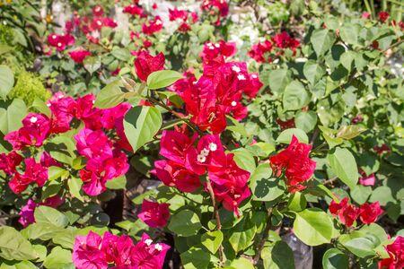 flower nursery: nursery decorative flower group. Close up shot