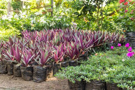 botanical farms: nursery decorative plants Stock Photo