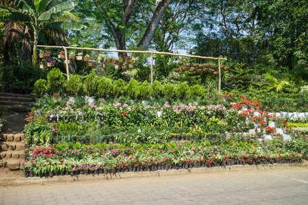 resale: plants outside a nursery for sale in spring