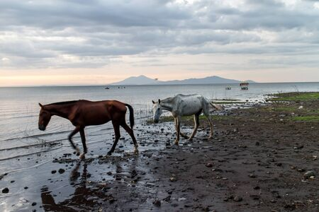 lake beach: horse on Nicaragua lake beach at sunshine