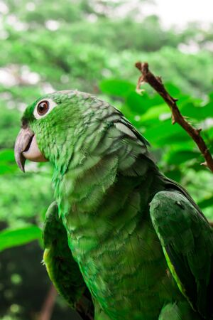natural habitat: parrot on natural habitat. Green concept