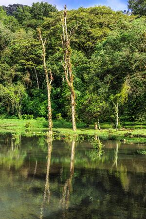 selva: Selva Negra in Matagalpa, Nicaragua, natural forest view with water from lake Stock Photo