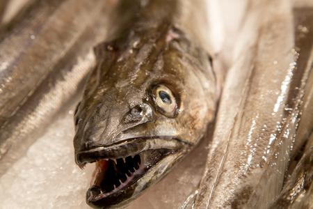 mercat: Fresh sea fish on ice on. Focus on head front fish.