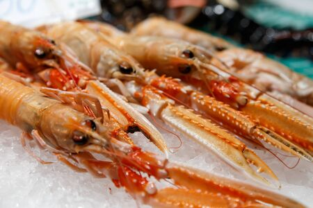 fresh Nephrops on sale at market